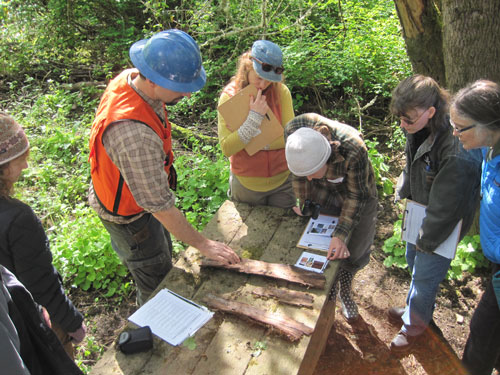 Oregon Forest Pest Detector team looks at ash bark samples