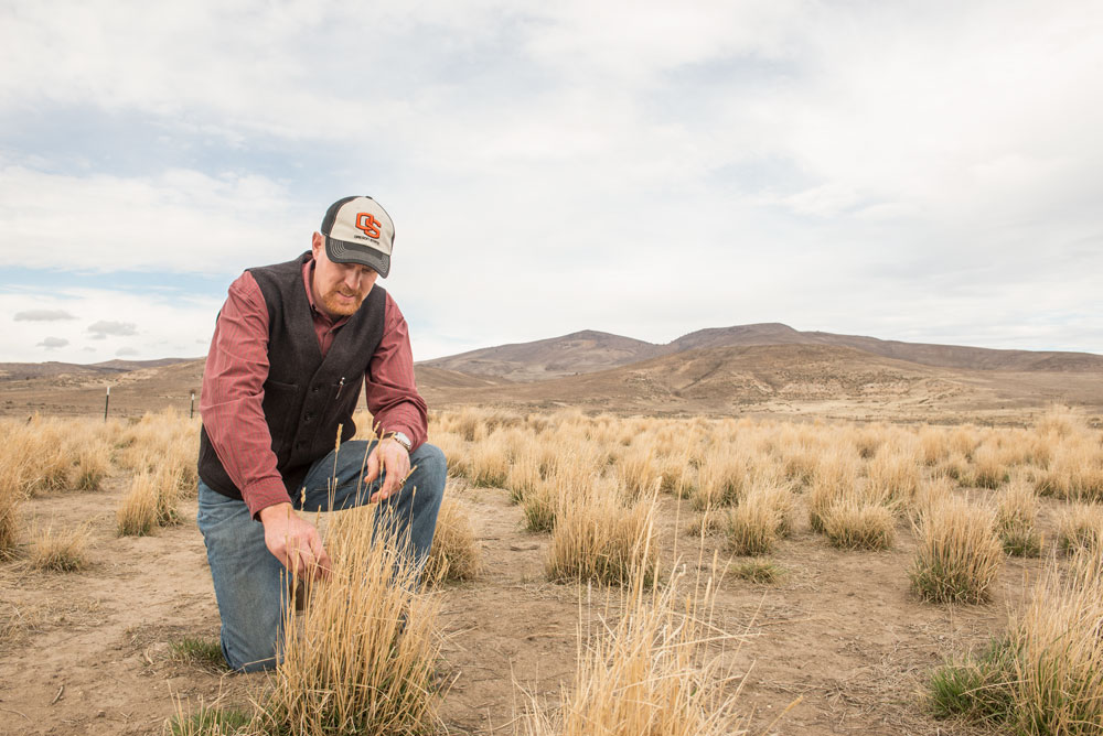 Dustin Johnson, associate professor of practice and Extension livestock and rangeland field faculty