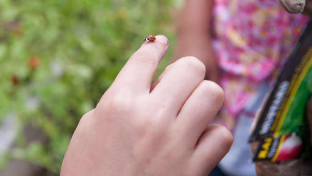 A lady bug rests on a child's finger.